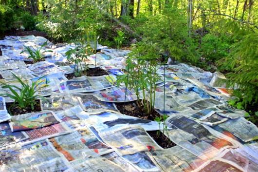 newspaper trick